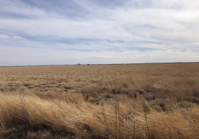 Parmer County, Texas, ,Land,For sale,1045