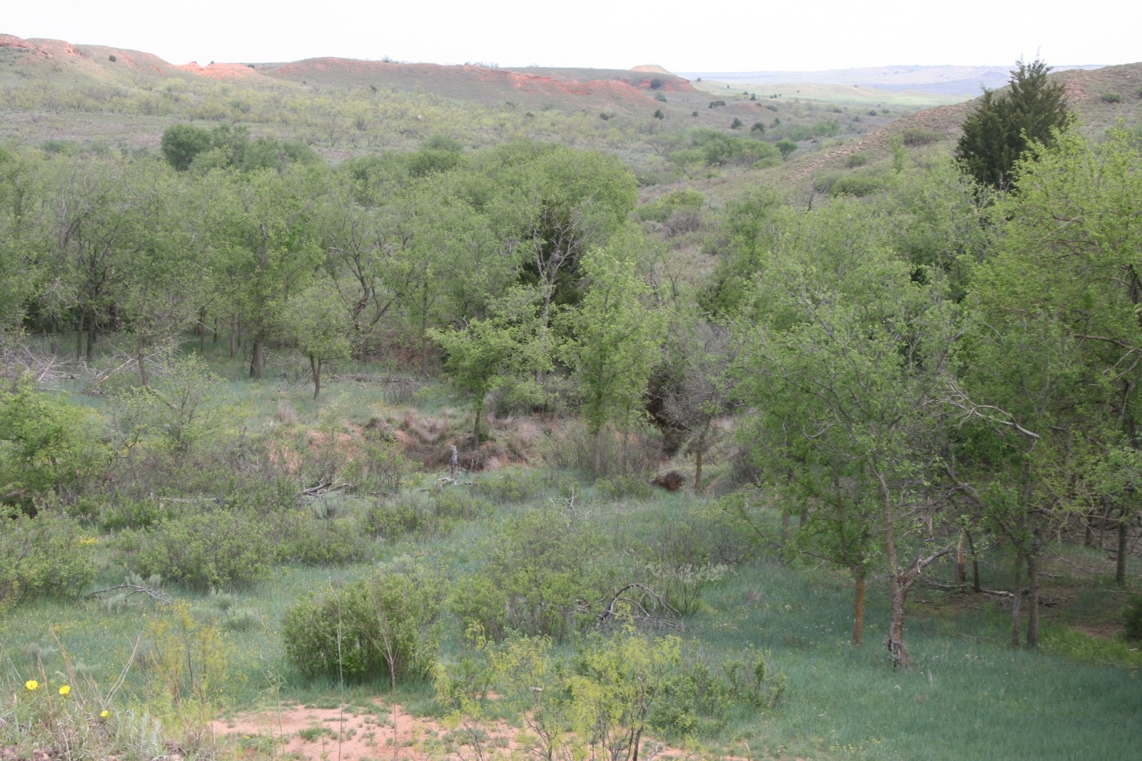 Donley County, Texas, ,Land,For sale,1046